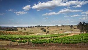 South Australian vineyards