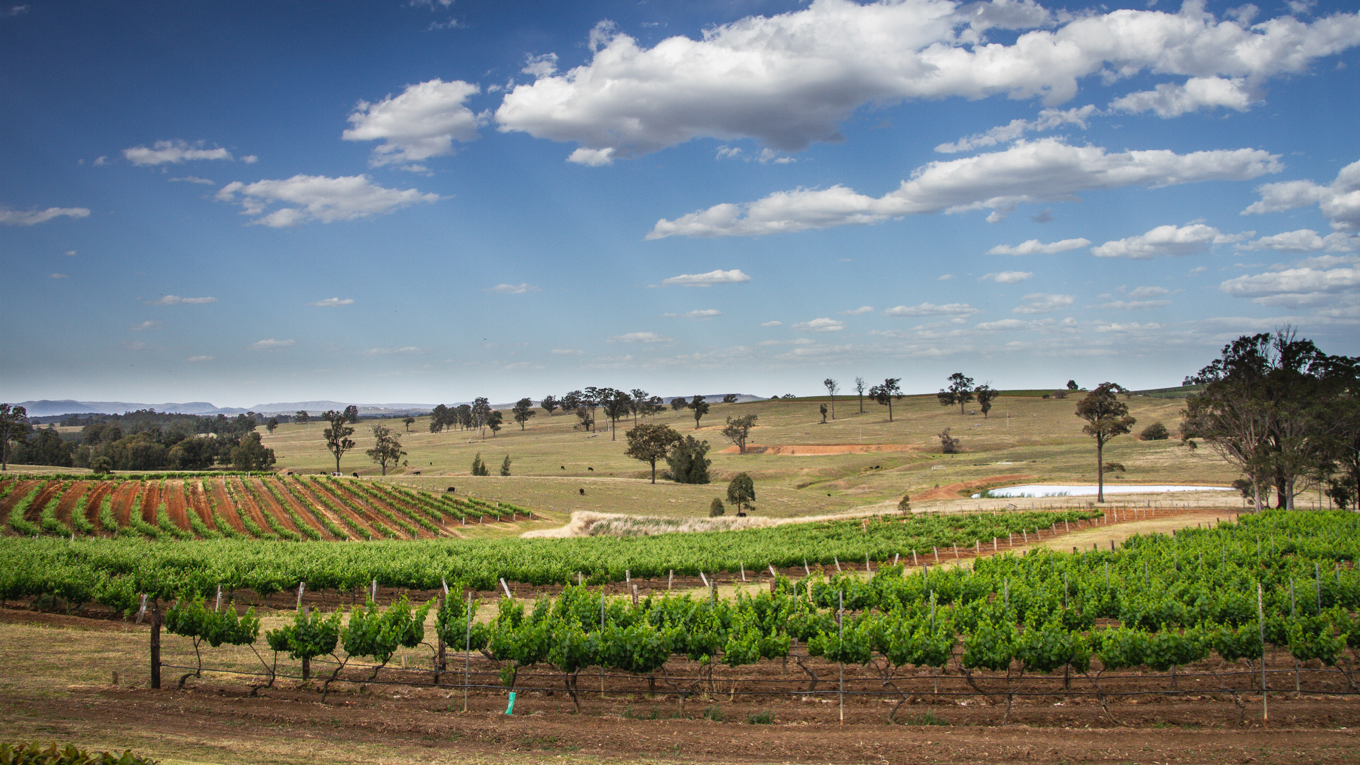 Investors thirsty for South Australia's vineyards